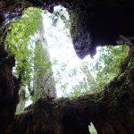 屋久島 縄文杉登山と西部林道ハイキング