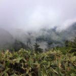 新緑と雨の石鎚山