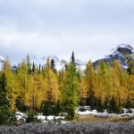 カナディアンロッキーのNo1黄葉ハイキングはラーチバレー