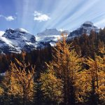 カナディアンロッキーハイキング 黄葉のラーチバレーとサンシャインメドウ