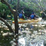 サガリバナ咲く西表島と鳩間島のシュノーケリング