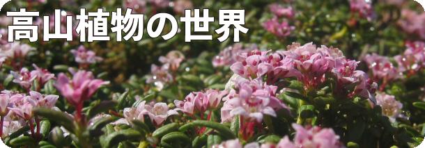 高山植物の世界