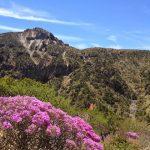 韓国の最高峰の漢拏山はツツジのベストシーズン