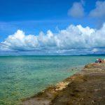 西表島のサガリバナ