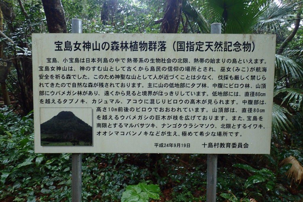 宝島 女神山の森