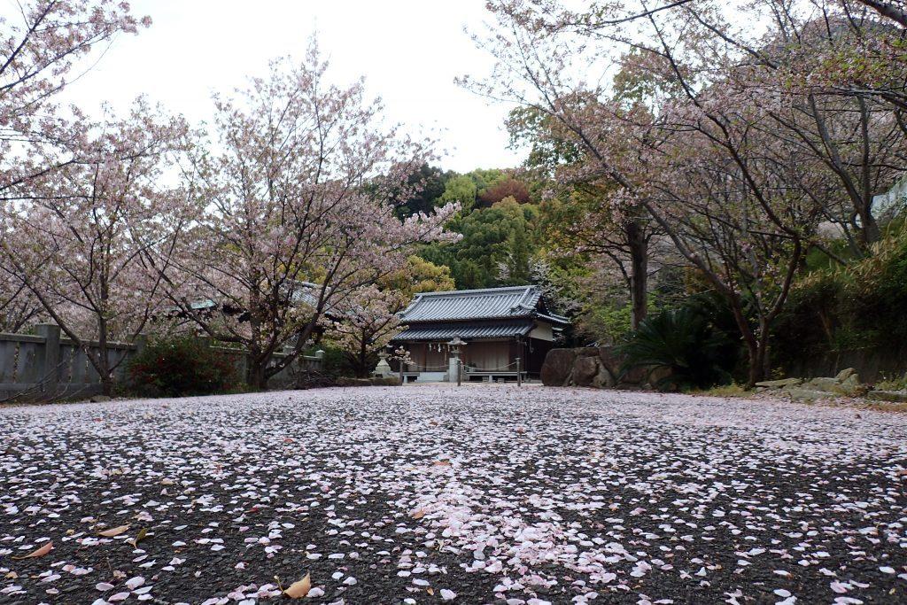 伊勢神社の桜