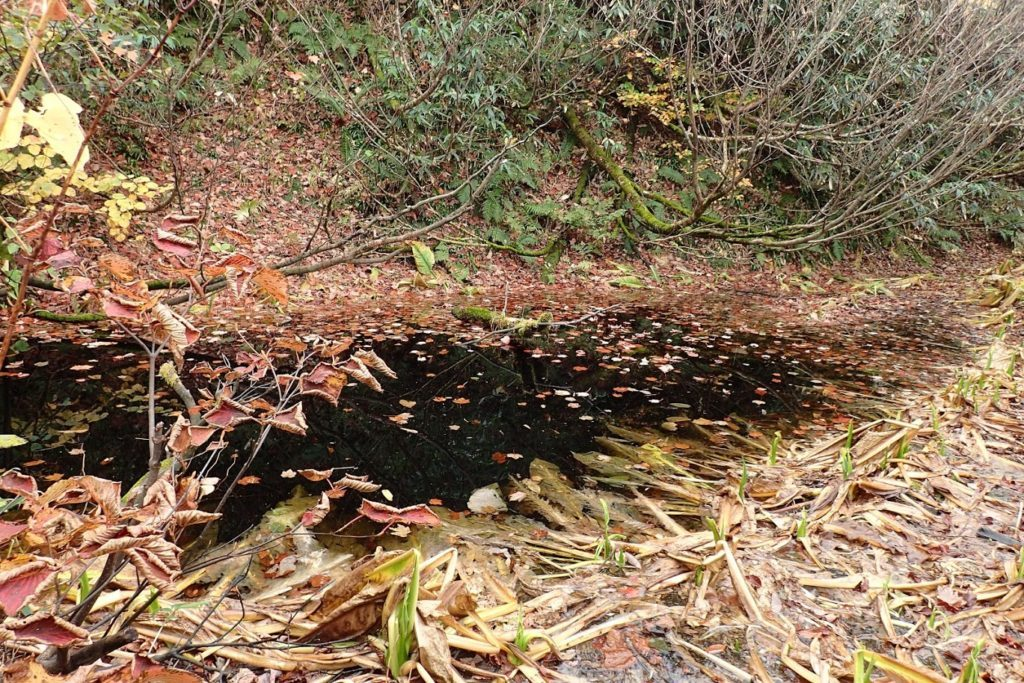 雨飾山 中の池