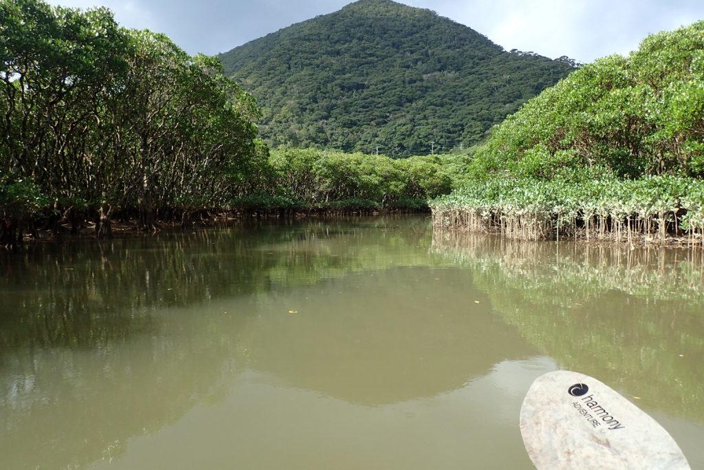 住用川マングローブ