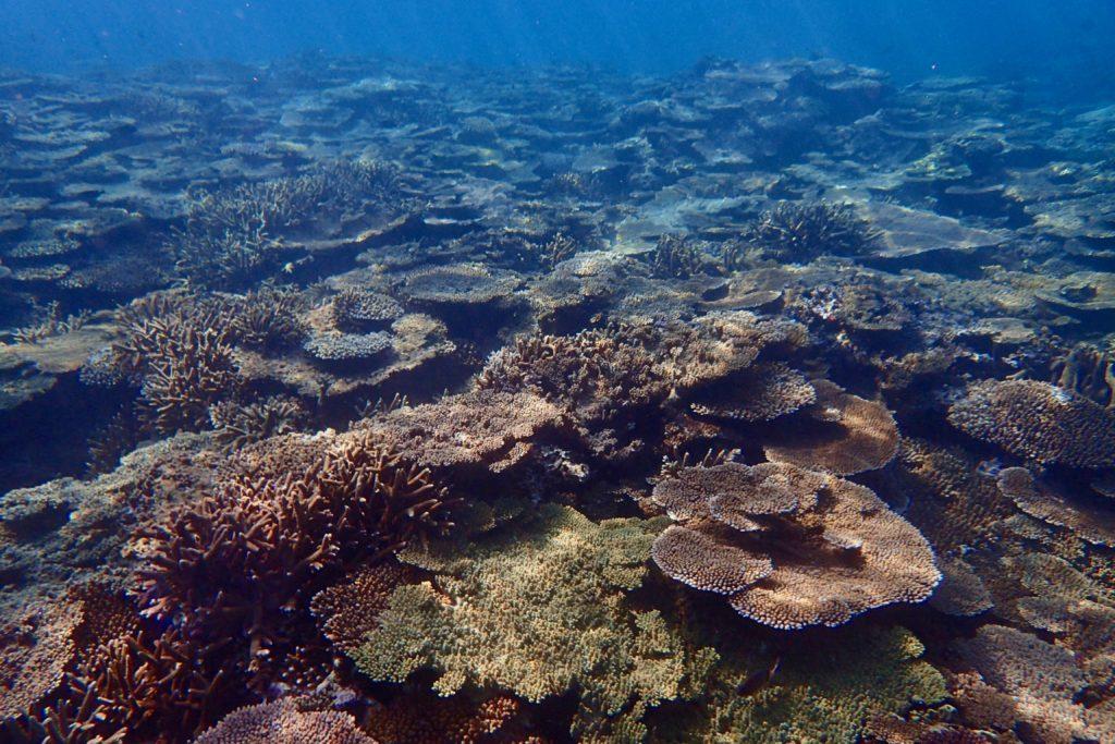 加計呂麻島のサンゴ礁
