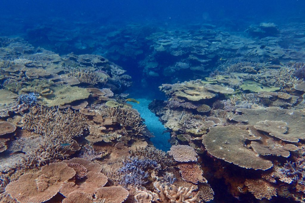 加計呂麻の海