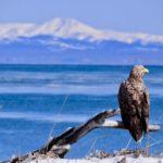冬の北海道を楽しむ 阿寒湖・釧路湿原・知床・摩周湖・野付半島