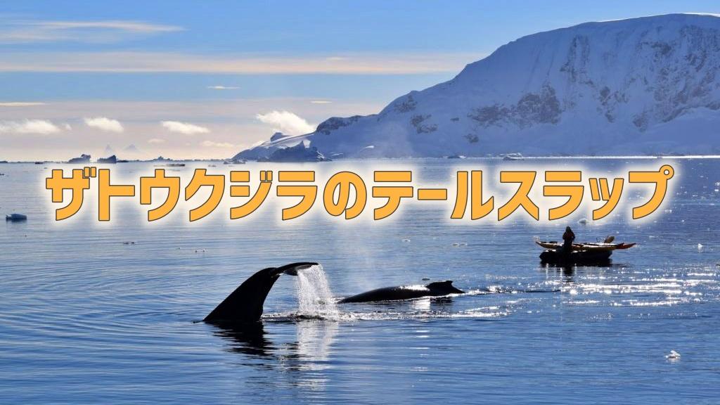 ザトウクジラのテールスラップ