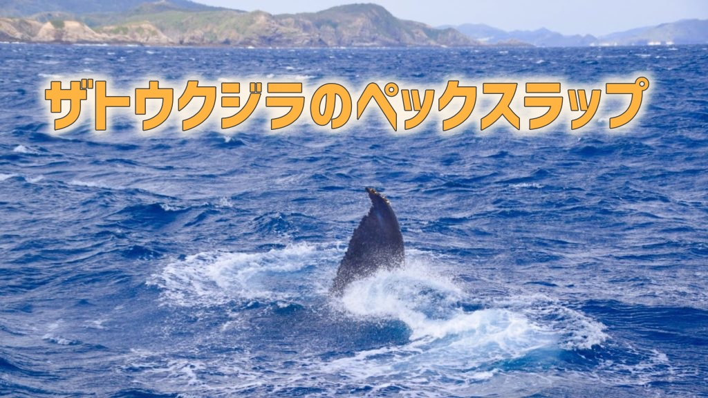 ザトウクジラのペックスラップ