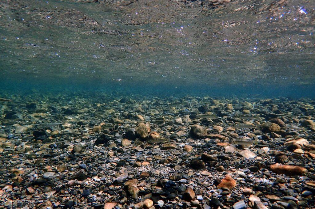 黒尊川の水中