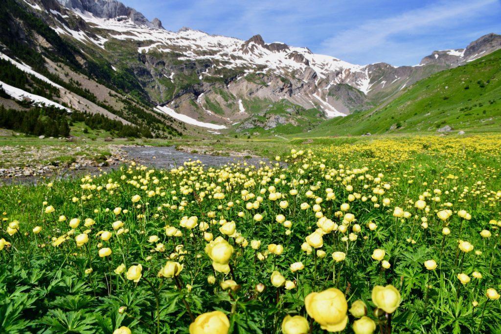 ピレネー山脈 オタル谷のお花畑