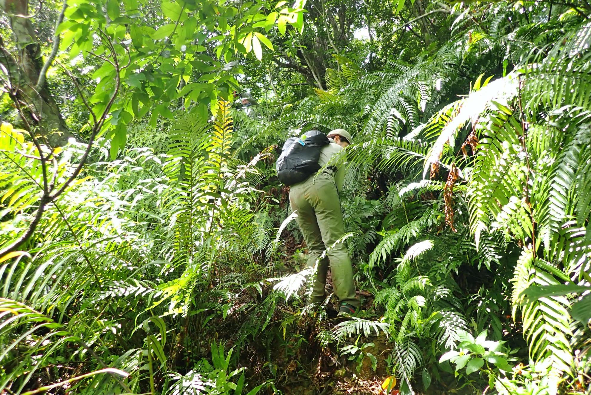 西表島ジャングル 核心部